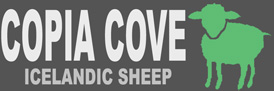 Copia Cove Icelandic Sheep | Butte Montana USA