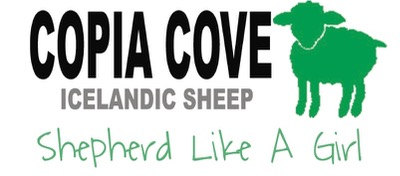 Copia Cove Icelandic Sheep