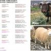 Copia Cove Icelandic Sheep | Registered Icelandic Lambs 2018 | Sheep for Sale