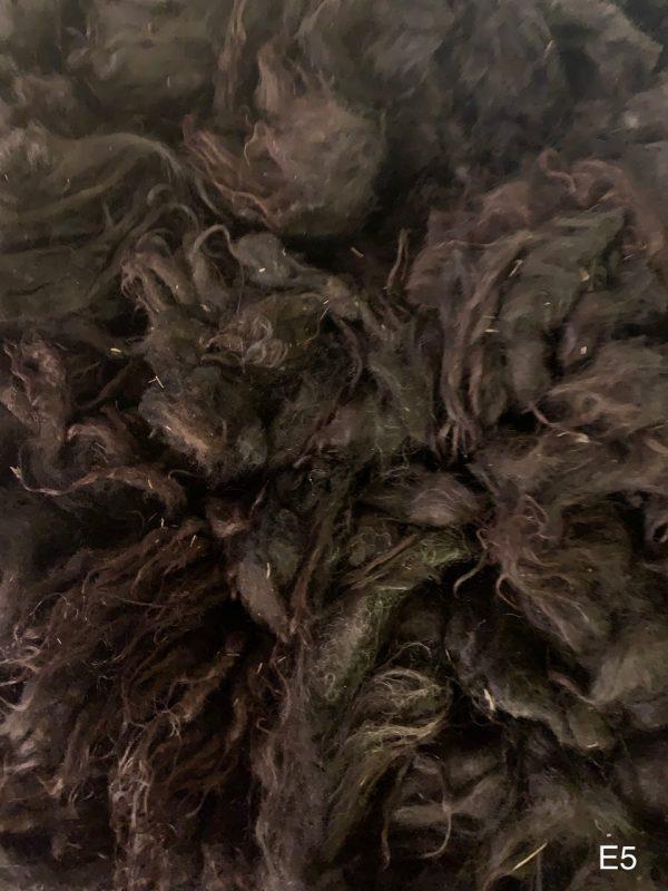 Copia Cove Icelandic Sheep | Icelandic Lamb Raw Fleece | Montana USA