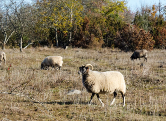 5 Easy Fall Craft Ideas with a Sheep Twist | Copia Cove Butte, Montana