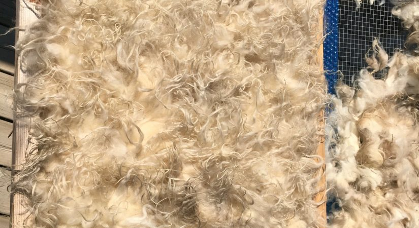 7 Tips for the Perfect Felted Fleece Rug   Copia Cove Butte Montana
